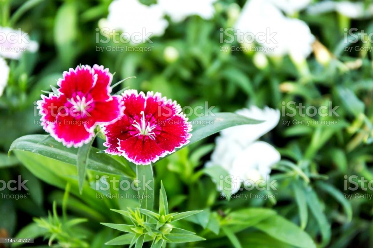 istockphoto-1145740747-2048x2048