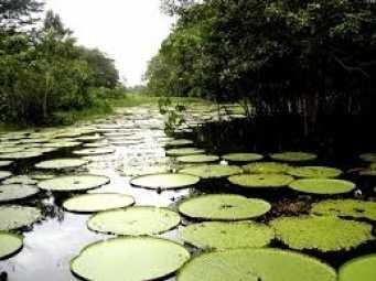 EL AMAZONAS COLOMBIA 20-07-2017