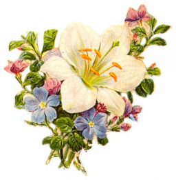 Flores para regalar 25-07-2017
