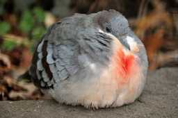 aves-gordas-mundo