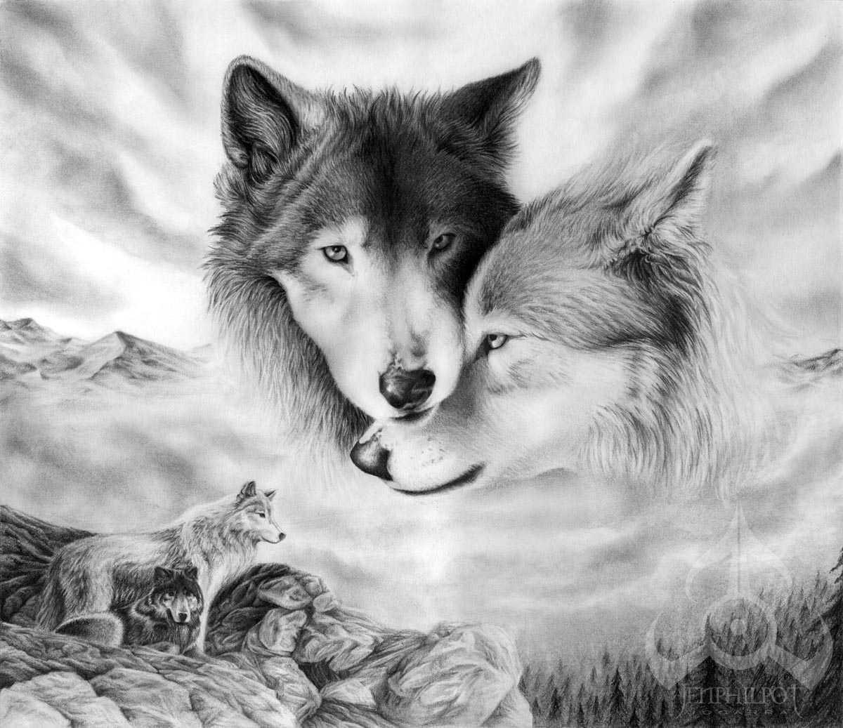 Espero-este-sea-mejor-recibido-son-imagenes-de-lobos-dibujos-algunos
