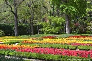 Flores 23-05-2017