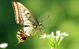 alas-de-una-mariposa-hd