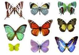 alas-de-mariposas