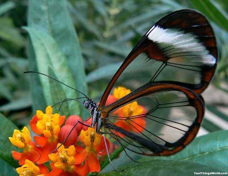 01de59c31c308215fd3c087514a2fe71--glass-butterfly-butterfly-wings
