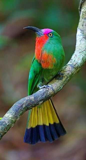 0ddbd3ab0cce651c269ef36046092f21--rainbow-colors-vivid-colors