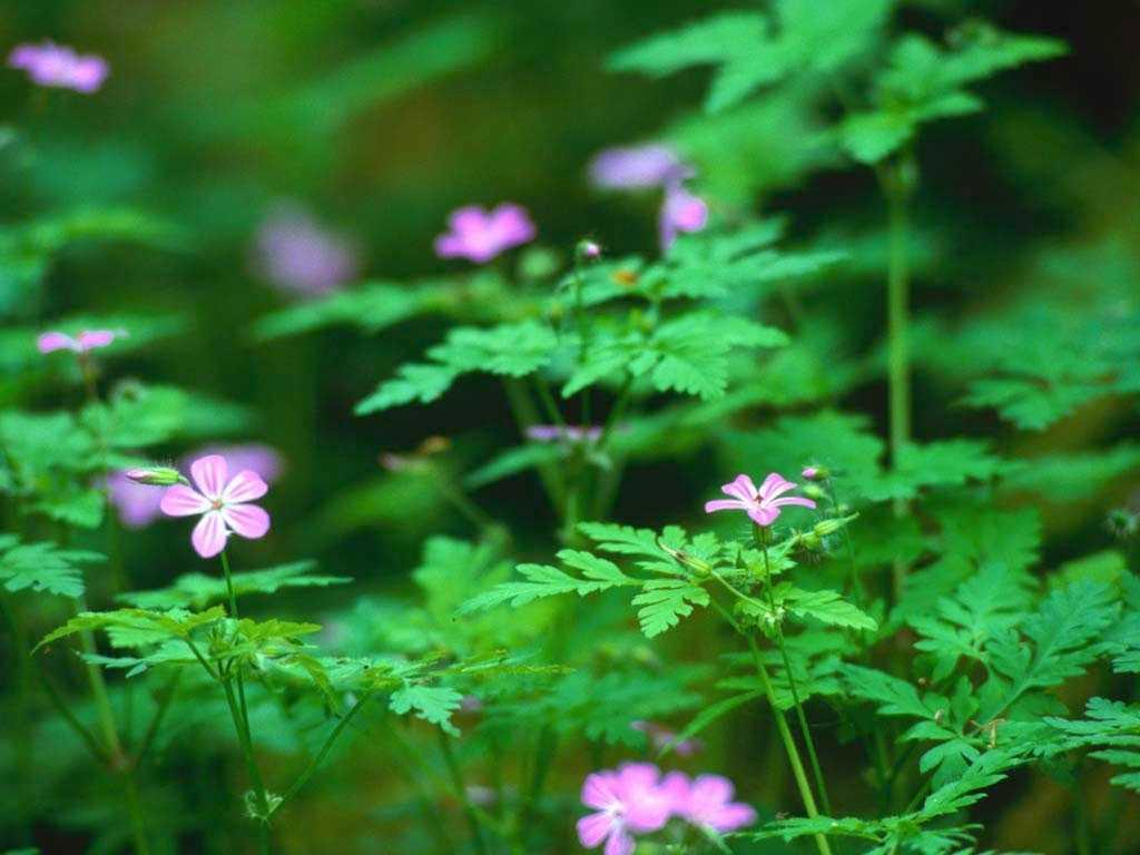 Forest Flowers.jpg