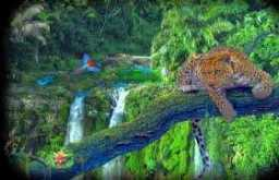 Animales exoticos ,con frases 10-01-2019
