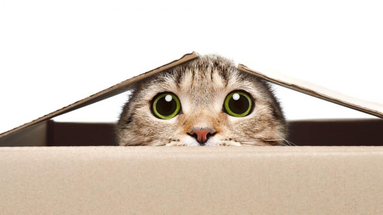 cosas-graciosas-de-los-gatos-1