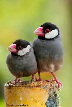 Pájaros de colores  17-02-2020