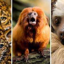 Animales del Amazonas y raros 06-04-2020