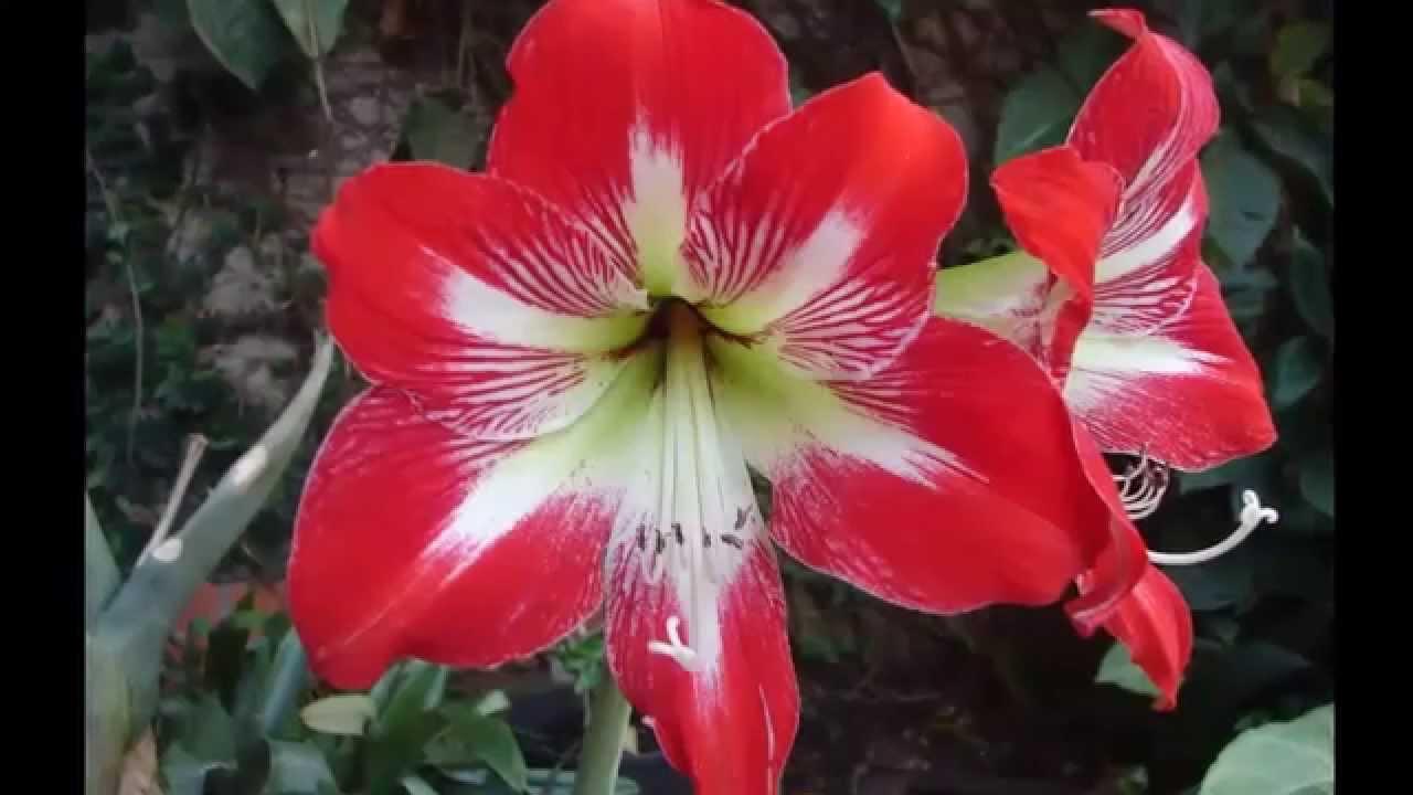 Las Flores Mas Hermosas Del Mundo Top 25