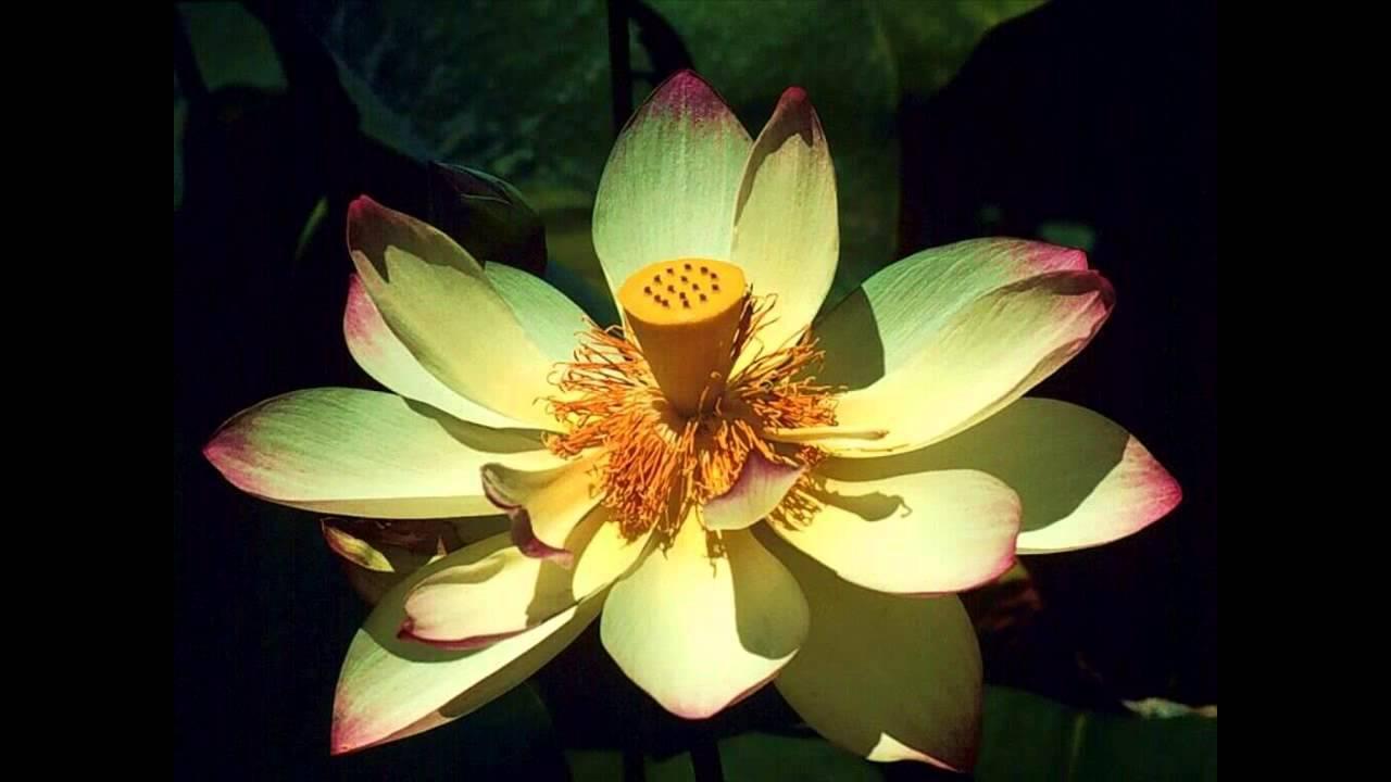 Las mejores flores y plantas exóticas del mundo